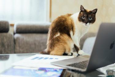 アクセス数・収益・変化などを語ります。はてなブログ運営6ヶ月