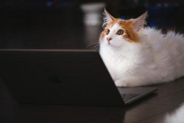 アクセス数・収益・失敗などを報告します。はてなブログ運営7ヶ月